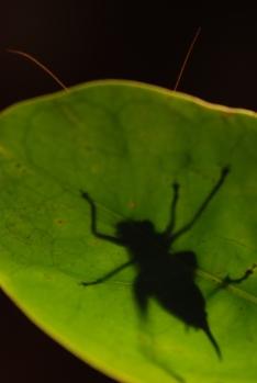 Shadow Cricket